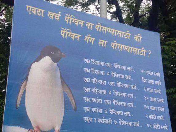 राणीच्या बागेतील पेंग्विन बाबतची निविदा अखेर रद्द; वादानंतर मुंबई महापालिकेचा निर्णय