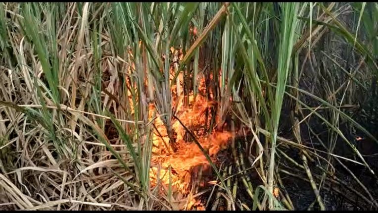Jalna: Seven acres of sugarcane burnt to ashes; Farmers are aggressive as MSEB's Golthan administration is losing millions of rupees