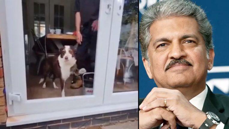 दरवाजा पाहून कुत्रा असा झाला कन्फ्युज; आनंद महिद्रांनी Video शेअर करत लिहिली ही गोष्ट