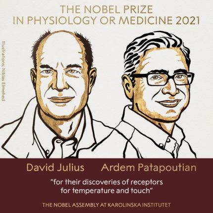 अमेरिकेतील डेव्हिड ज्युलियस आणि आर्डेम पटापाउटियन यांना यंदाचा नोबेल  पुरस्कार जाहीर