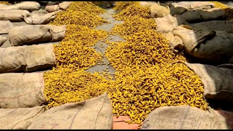 Damage to turmeric crop due to torrential rains in Marathwada Inflows to Sangli agricultural market declined